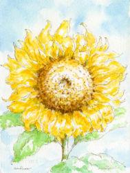 sunflower(ひまわり)